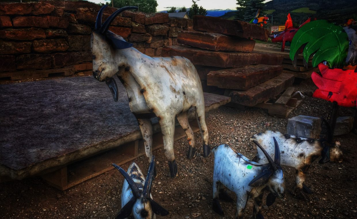 Goats. Submitted by Chris Lanham.