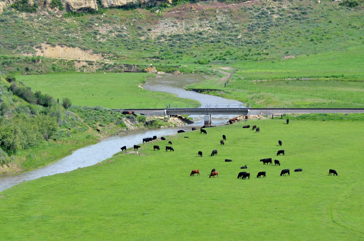 The primary focus at Saddleback Ranch/Double Dollar Cattle Company always has been beef. The ranch grazes 1,500 head of steers on its 8,000 acres.