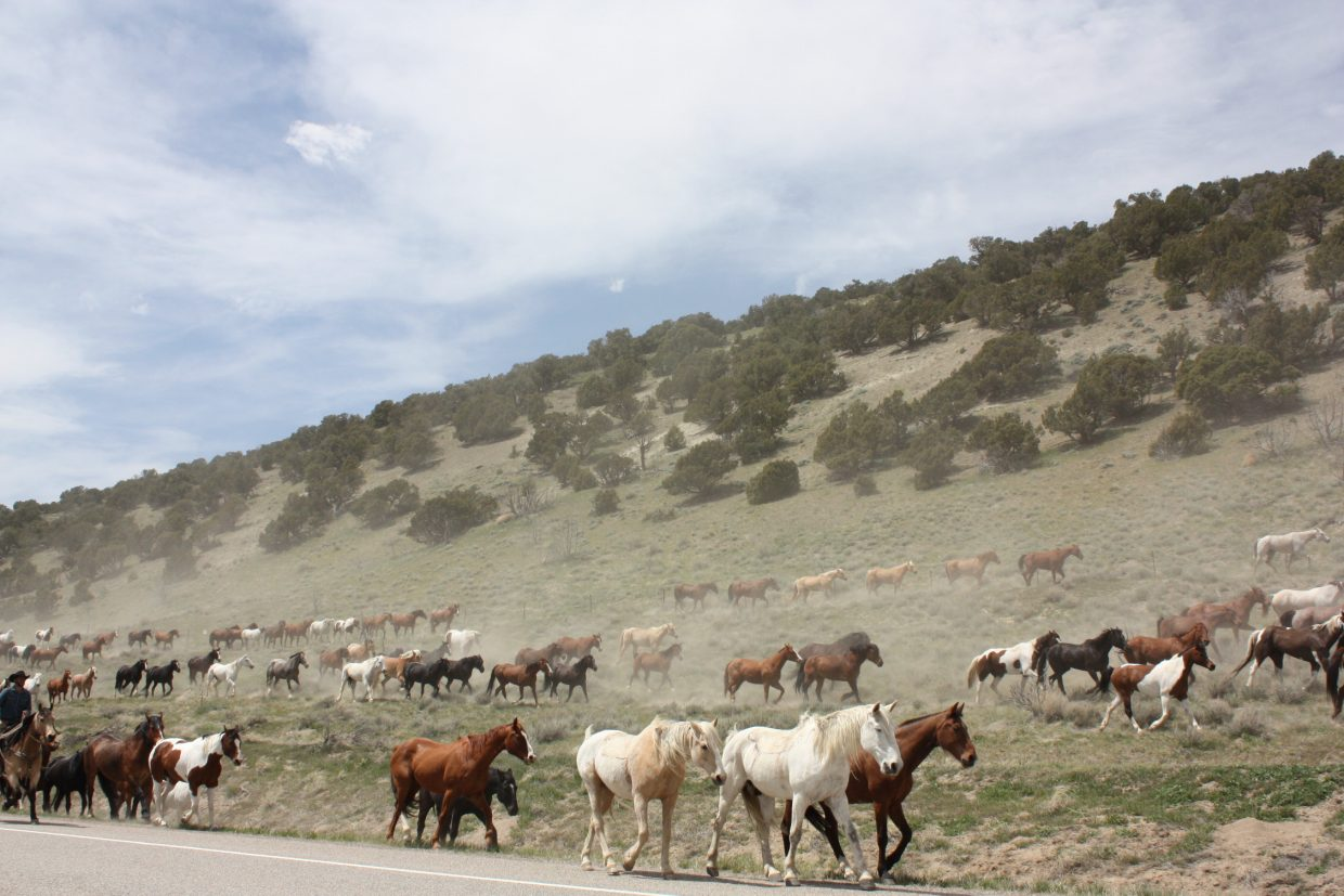 The Great American Horse Drive from Maybell. Submitted by Don Haas.