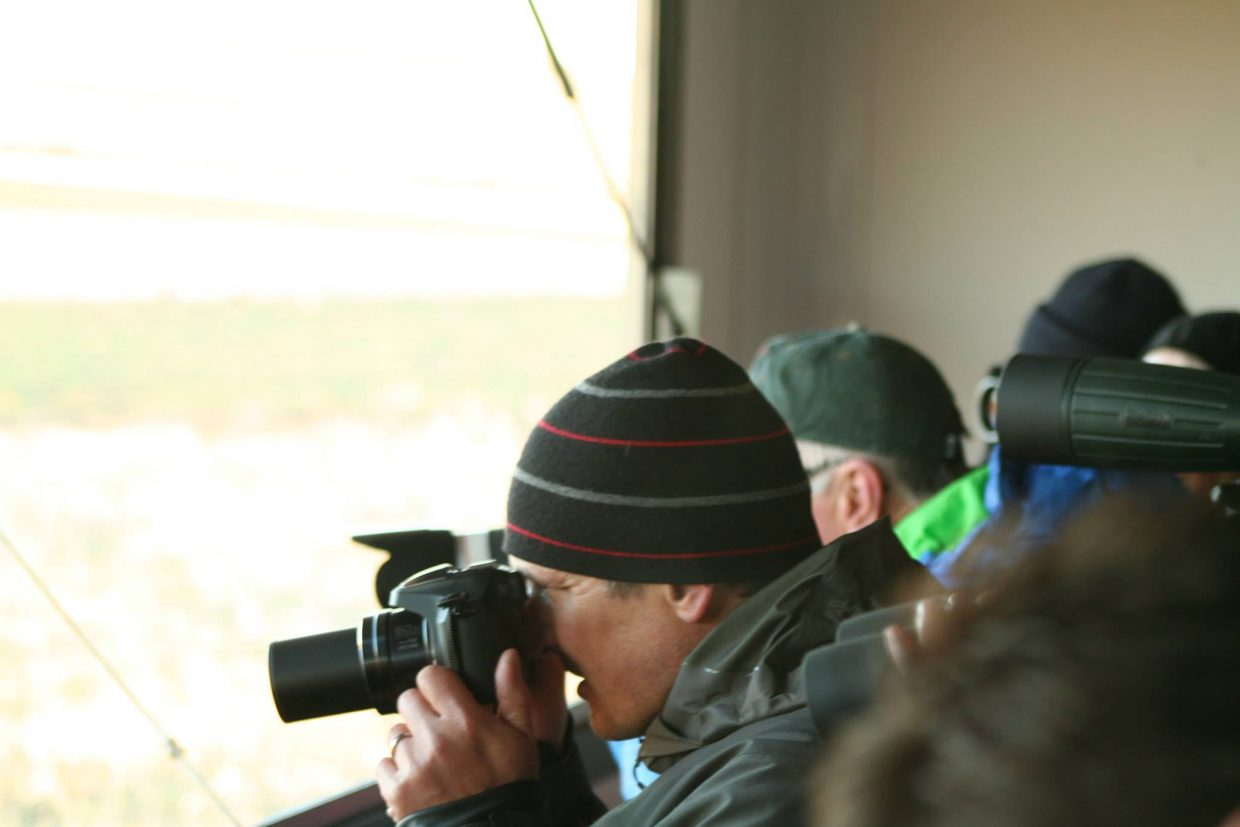 Conservation Colorado offers people the opportunity to view sage grouse in their habitat during 20 sage grouse viewing outings a year.