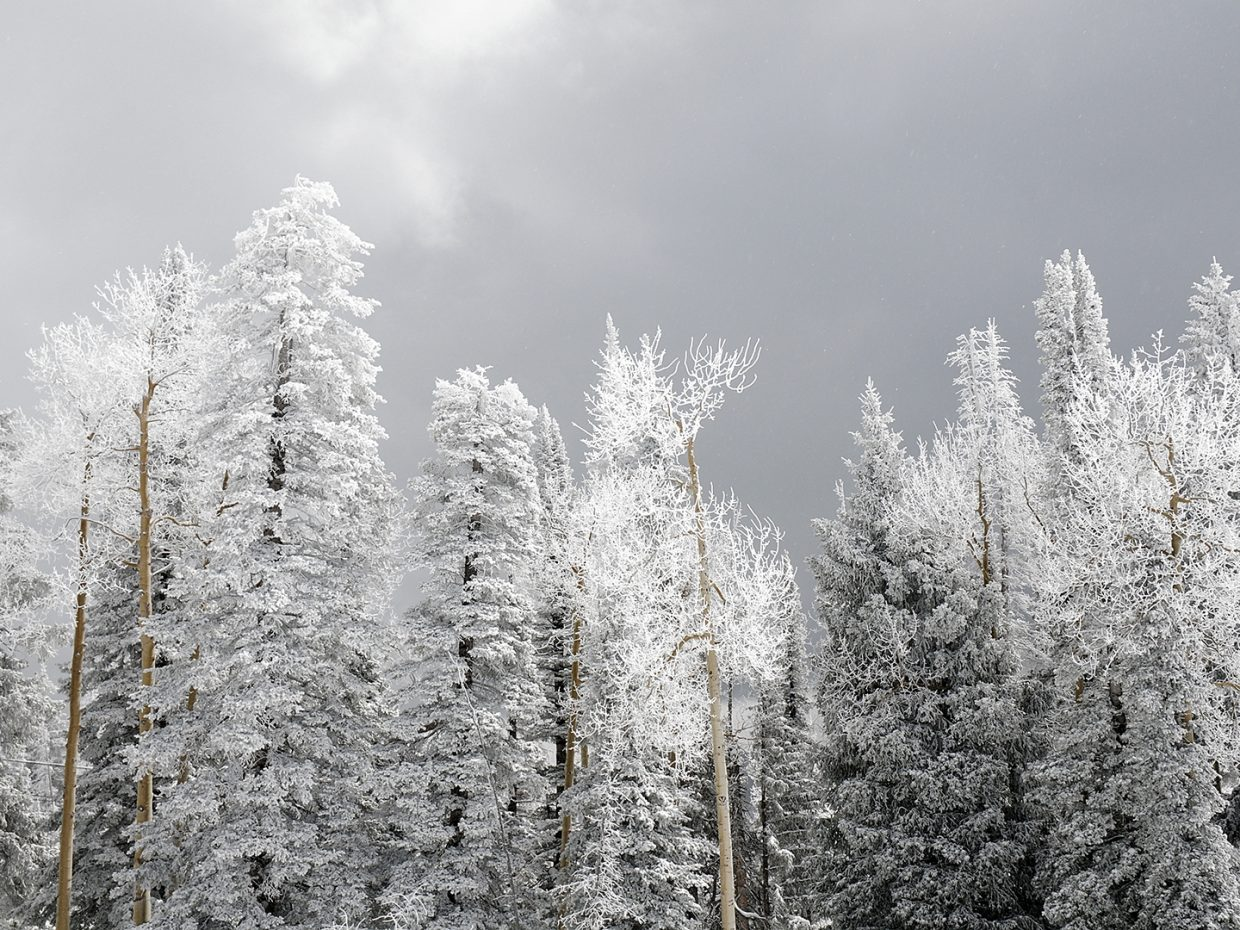 Snow crusted trees at Steamboat Ski Area. Submitted by Jeff Hall.
