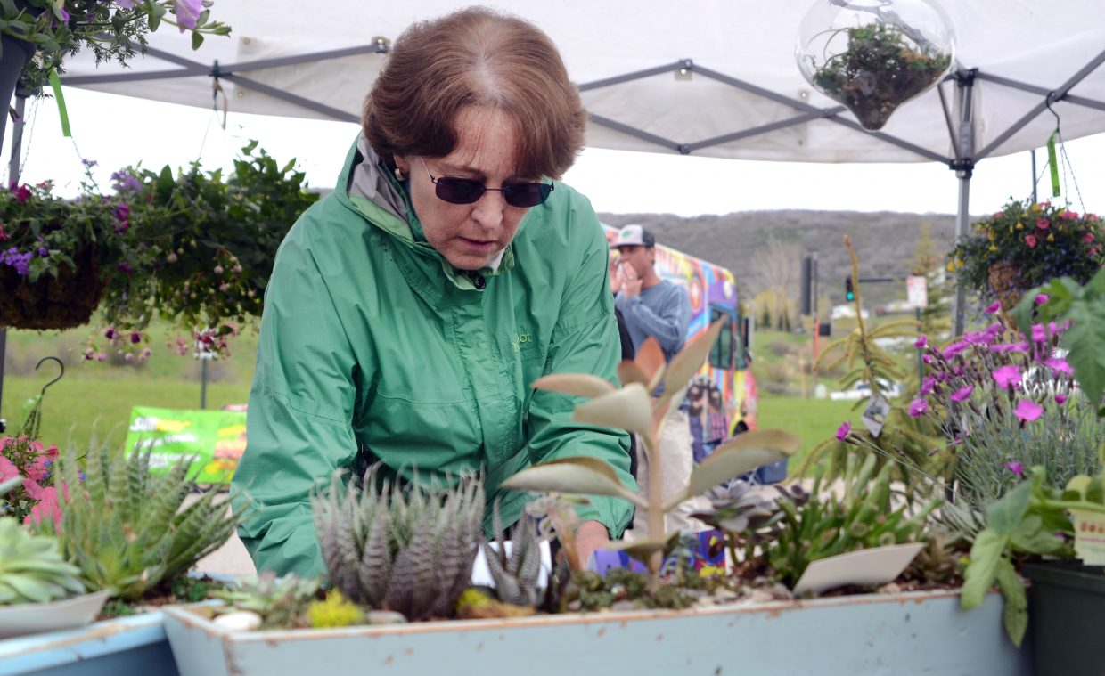 Debbie Gooding goes through some plants and flowers at the Nature's Design Landscape Garden Center booth Saturday morning at the annual Home and Garden Expo held at the Steamboat Springs Community Center.