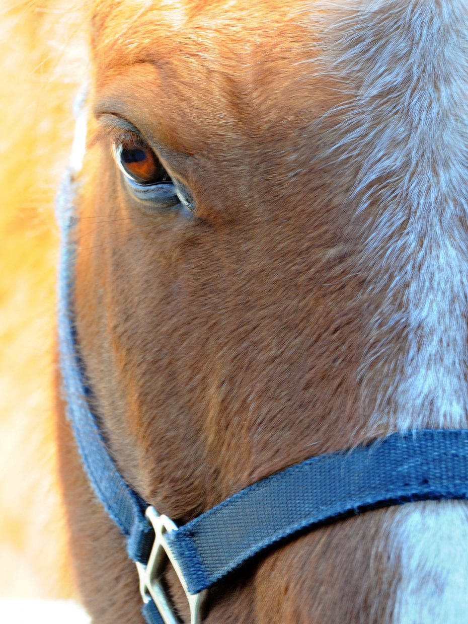 A horse's eye. Submitted by Jeff Hall.