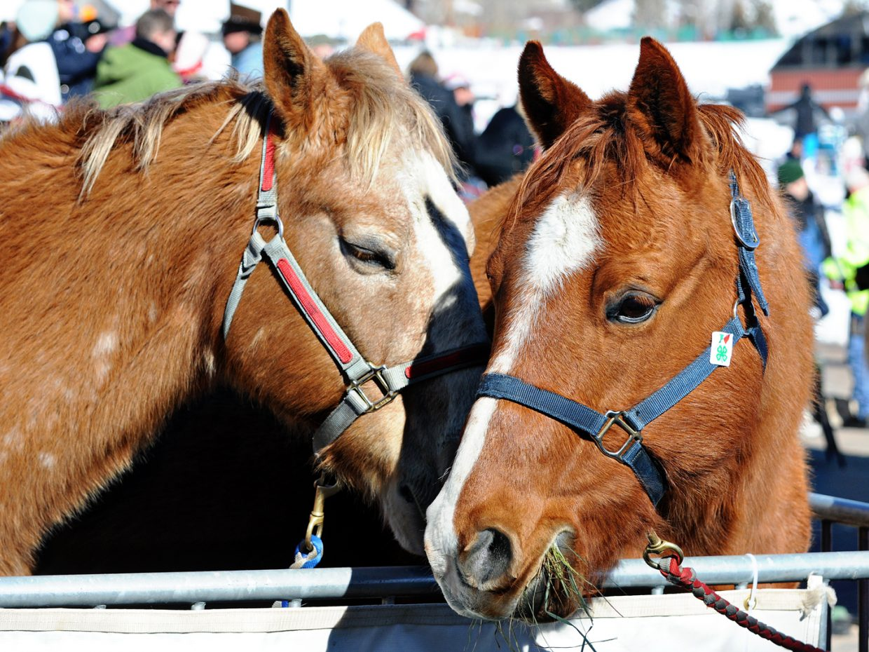 Horses telling secrets at the Cowboy Downhill. Submitted by: Jeff Hall