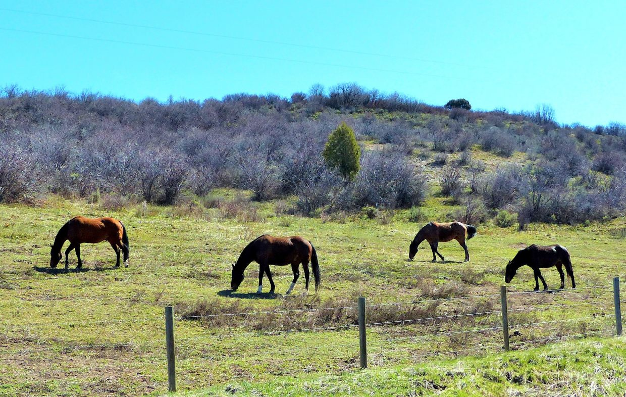 Submitted by Shannon Lukens.