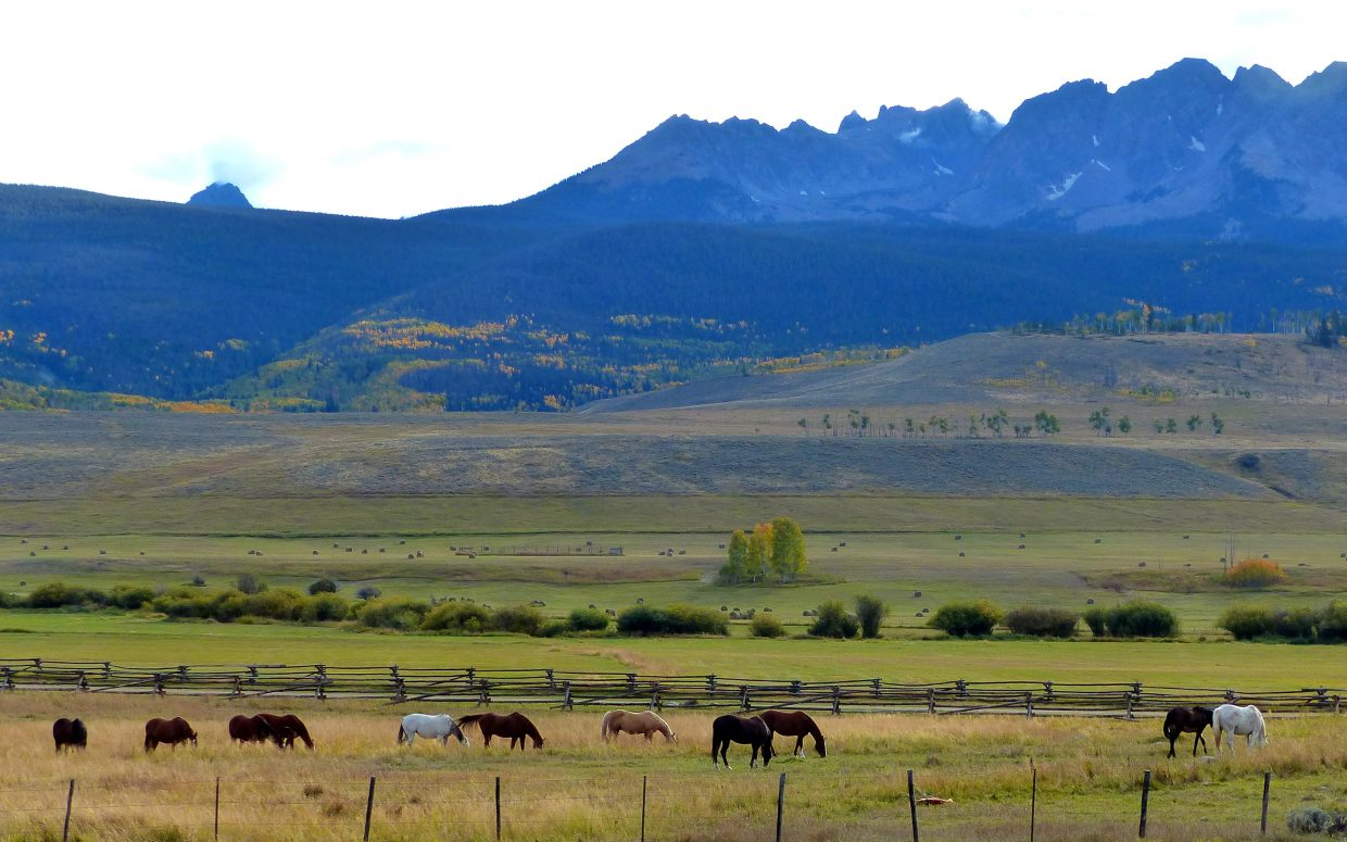 Horses north of Silverthorne. Submitted by: Shannon Lukens
