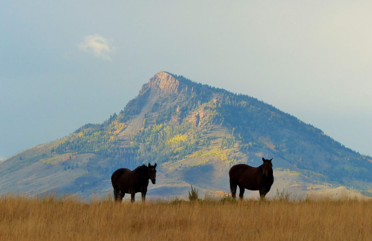 Gorgeous horses north of Kremmling with beautiful fall colors as a backdrop. Submitted by: Shannon Lukens