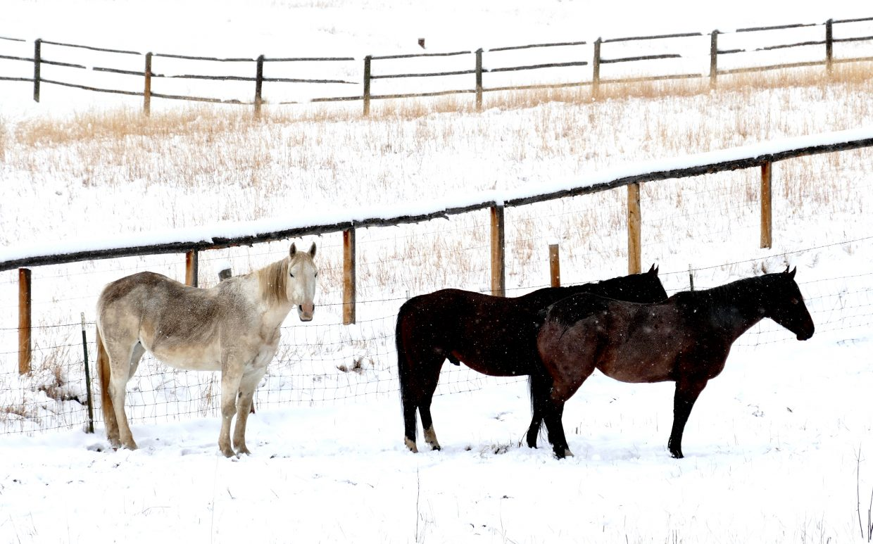 """""""Horses and cows, along Elk River Road, just north of Steamboat."""" Submitted by Shannon Lukens."""