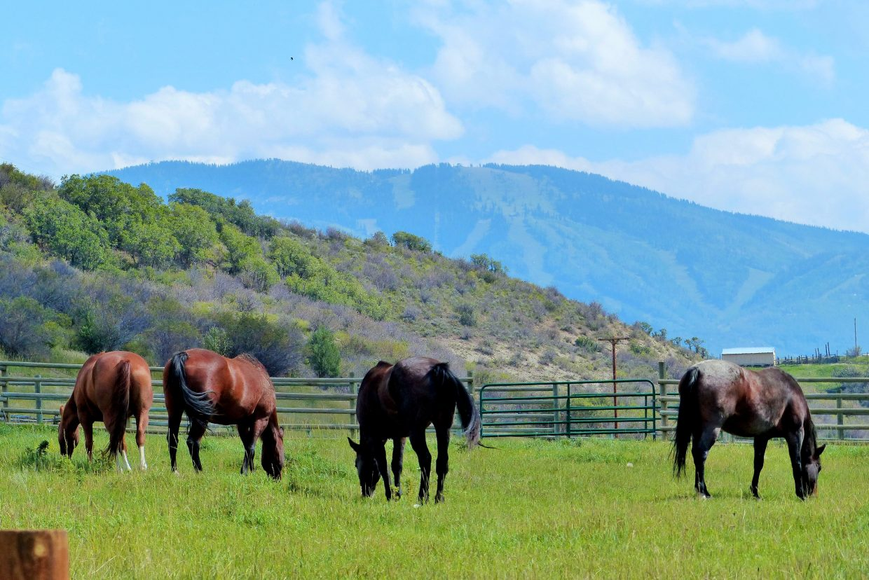 The horses are along Elk River Road, just north of Steamboat on the way to Steamboat Lake. Photo submitted by Shannon Lukens.