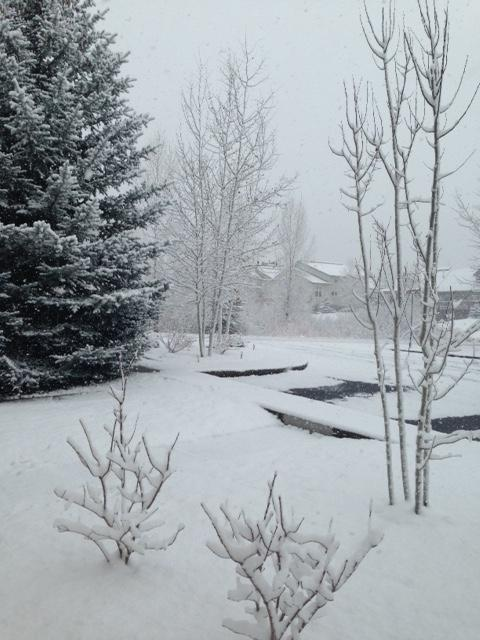 Morning snow. Submitted by: Barbara Sparks.