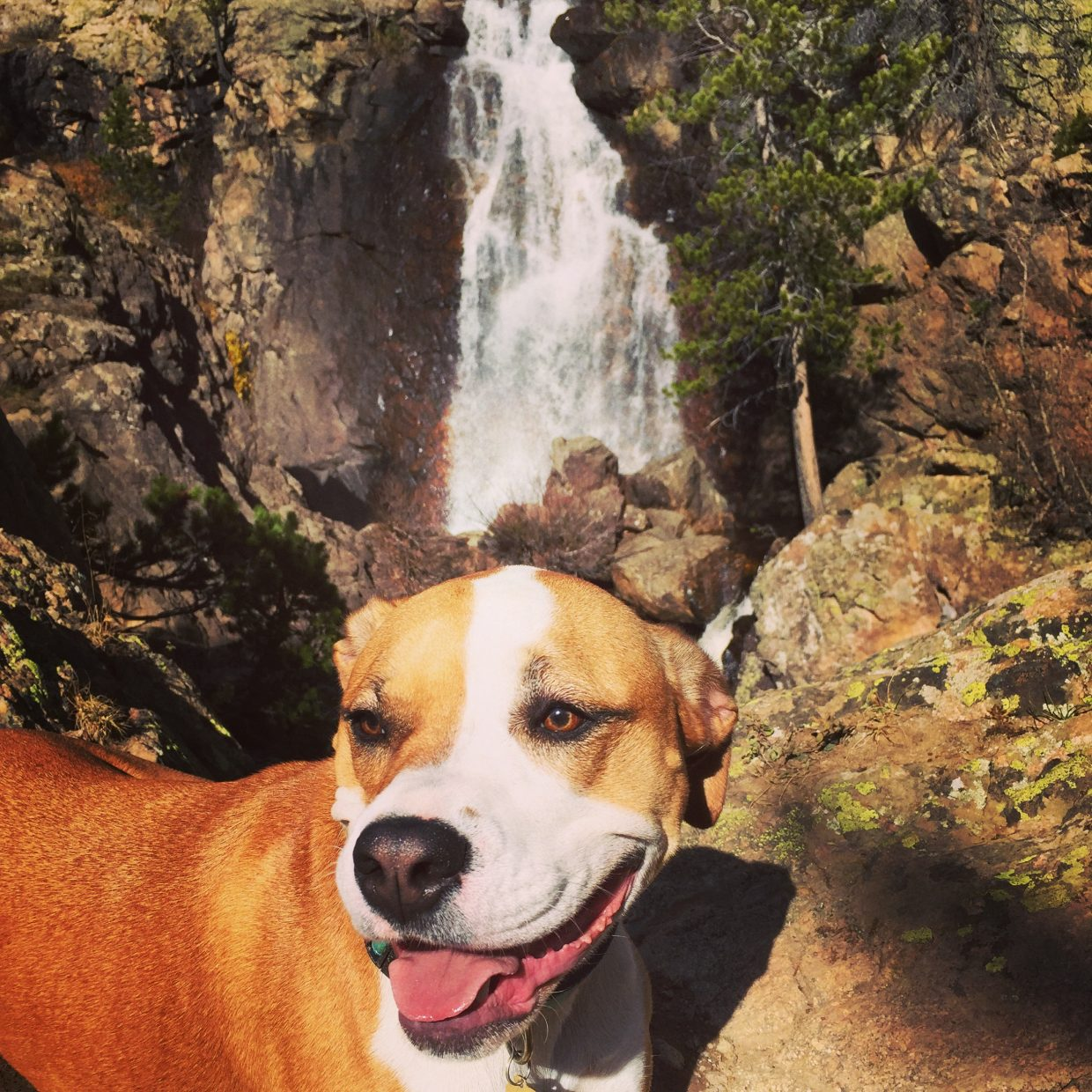 Beautiful hike up to Fish Creek Falls. Doggy heaven! Submitted by: Jessica Scroble