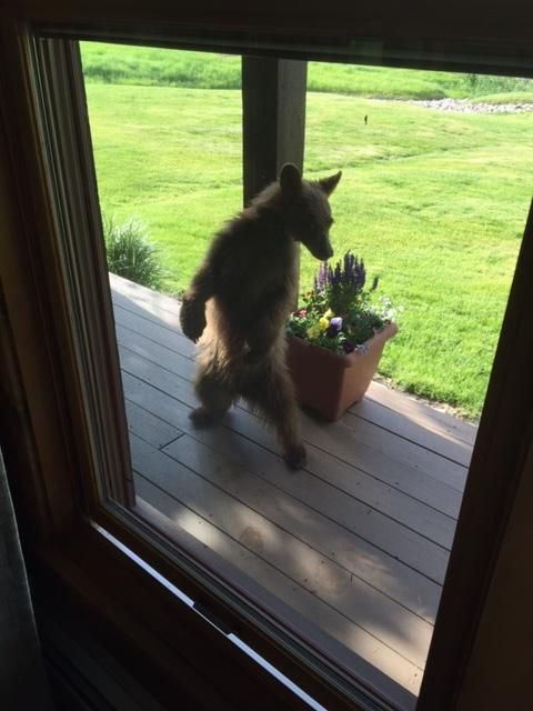 Cub on our deck at Catamount. Submitted by Christy McKee.