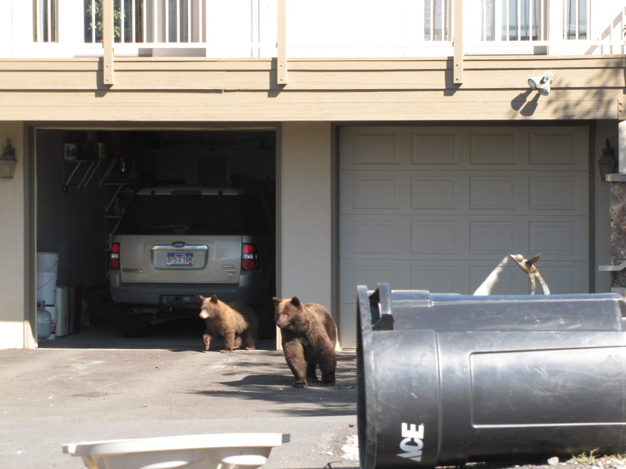 The locals looking over the real estate. Submitted by Kathy Reul.
