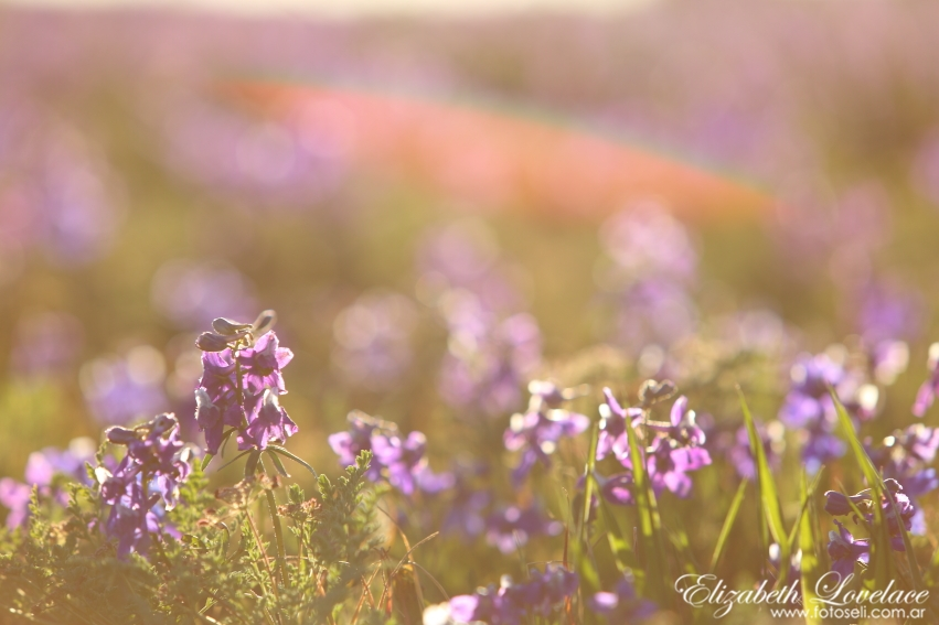 These are wildflowers by the airport in town. Submitted by: Elizabeth Lovelace