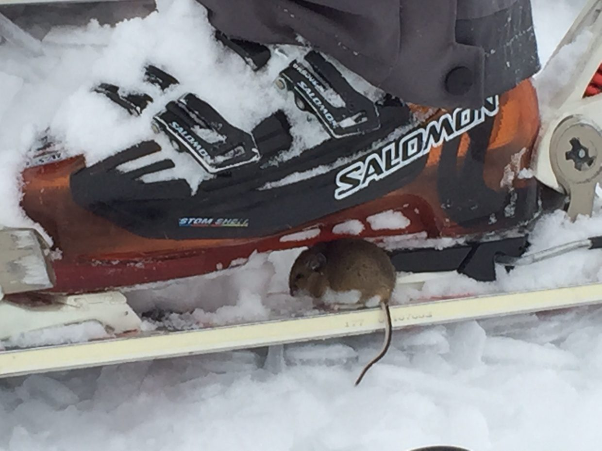 This mouse had a need for speed. Submitted by: Jon Wade.