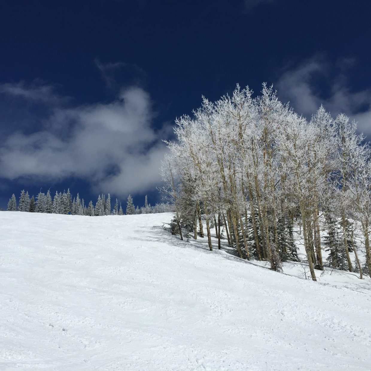 Bluebird Sky Day on the Mtn today. Submitted by: Stanzi Lucy