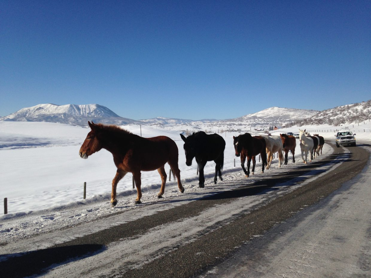 Horses on Routt County Road 129. Submitted by: Lee Jeffrey