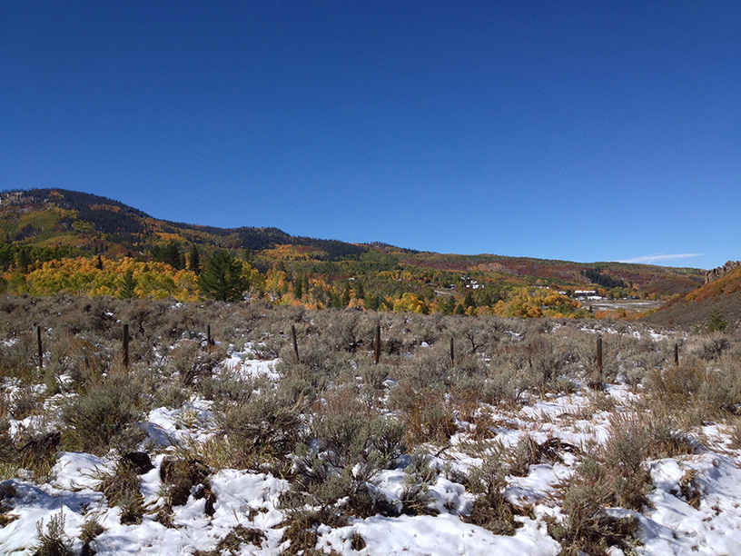 Took these on a walk near Stagecoach Reservoir. Submitted by: Joe Schultz