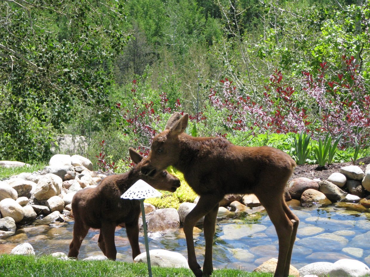 Mama and babies cooling down. Submitted by: Josie Fratus