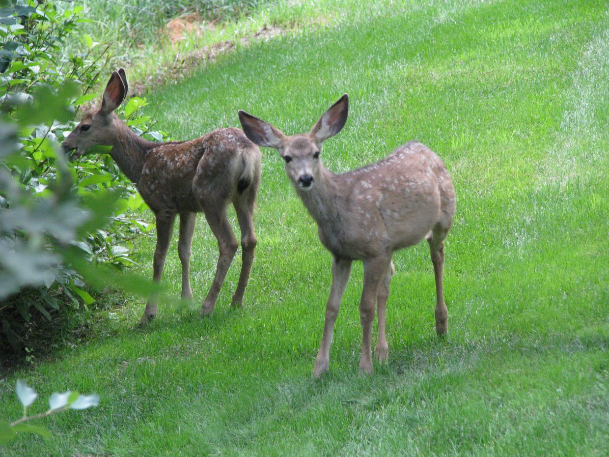 Mama and babies. Submitted by: Josie Fratus