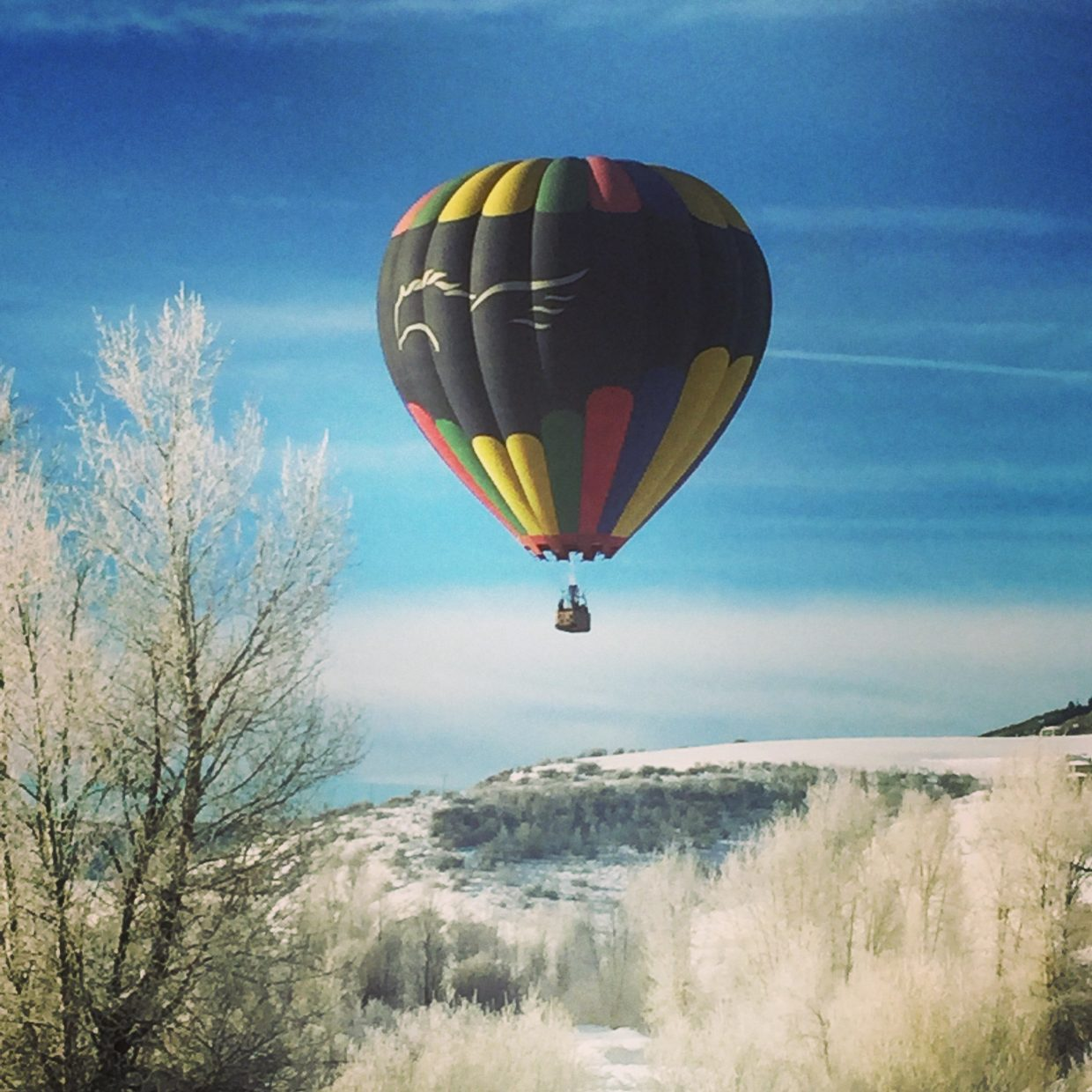 Hot air balloon in my back yard. Submitted by: Jessica Scroble.