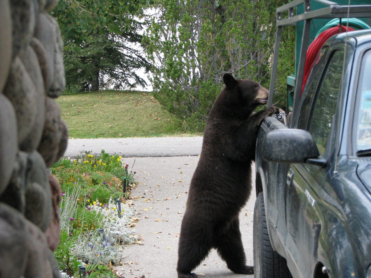 Getting into the truck in the driveway. Submitted by: Josie Fratus