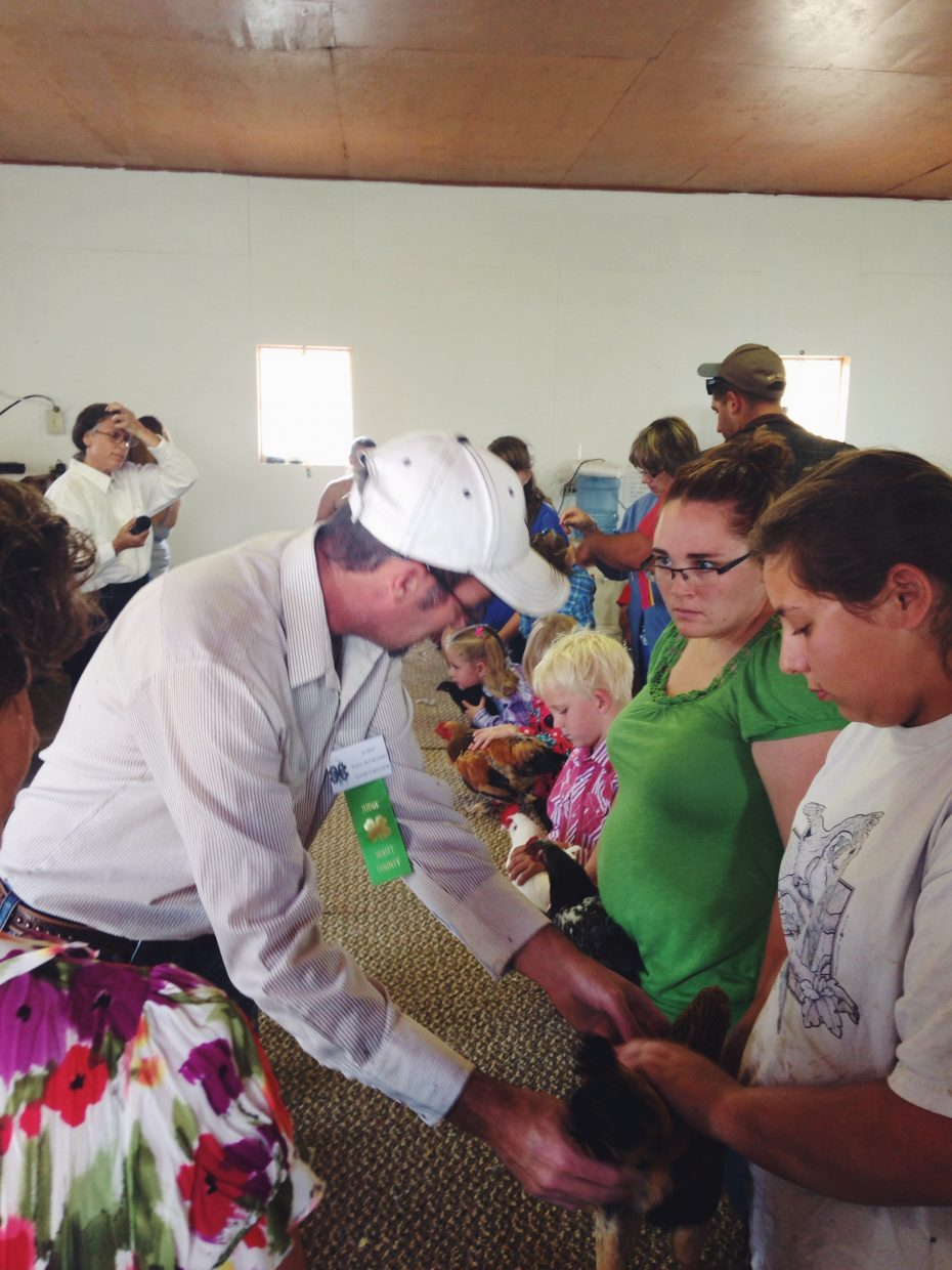There were three classes competing in the open class poultry show at the Routt County Fair in Hayden on Wednesday afternoon.