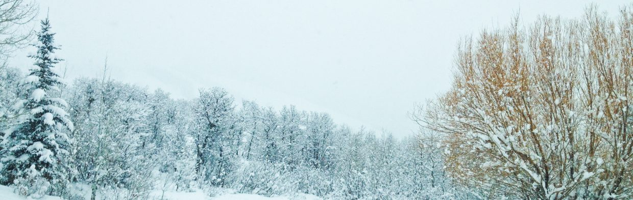 Panorama of my view of the mountain on a powder day. Submitted by: Elizabeth Wasserman