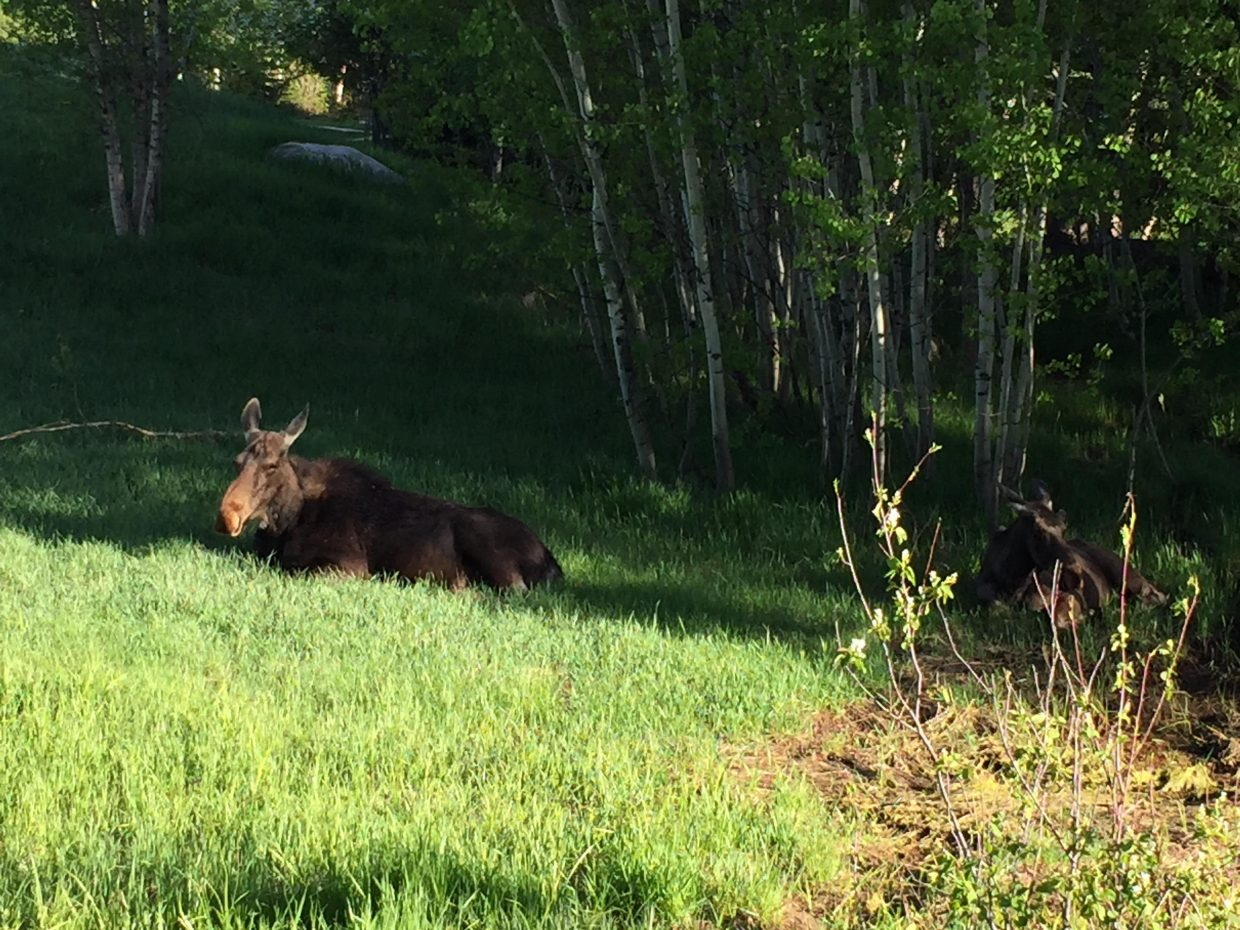 Just hanging out On the Blvd. Submitted by Karen Lindeman.