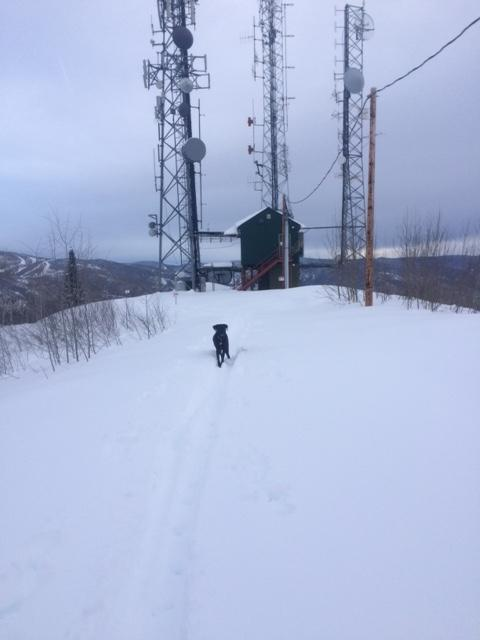 Freddy on a skinning trip to top of Emerald! Submitted by Craig Keefe.