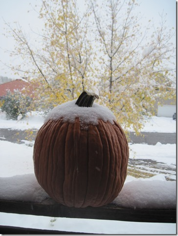 The frost is on the pumpkin! Submitted by: Carol Markowitz