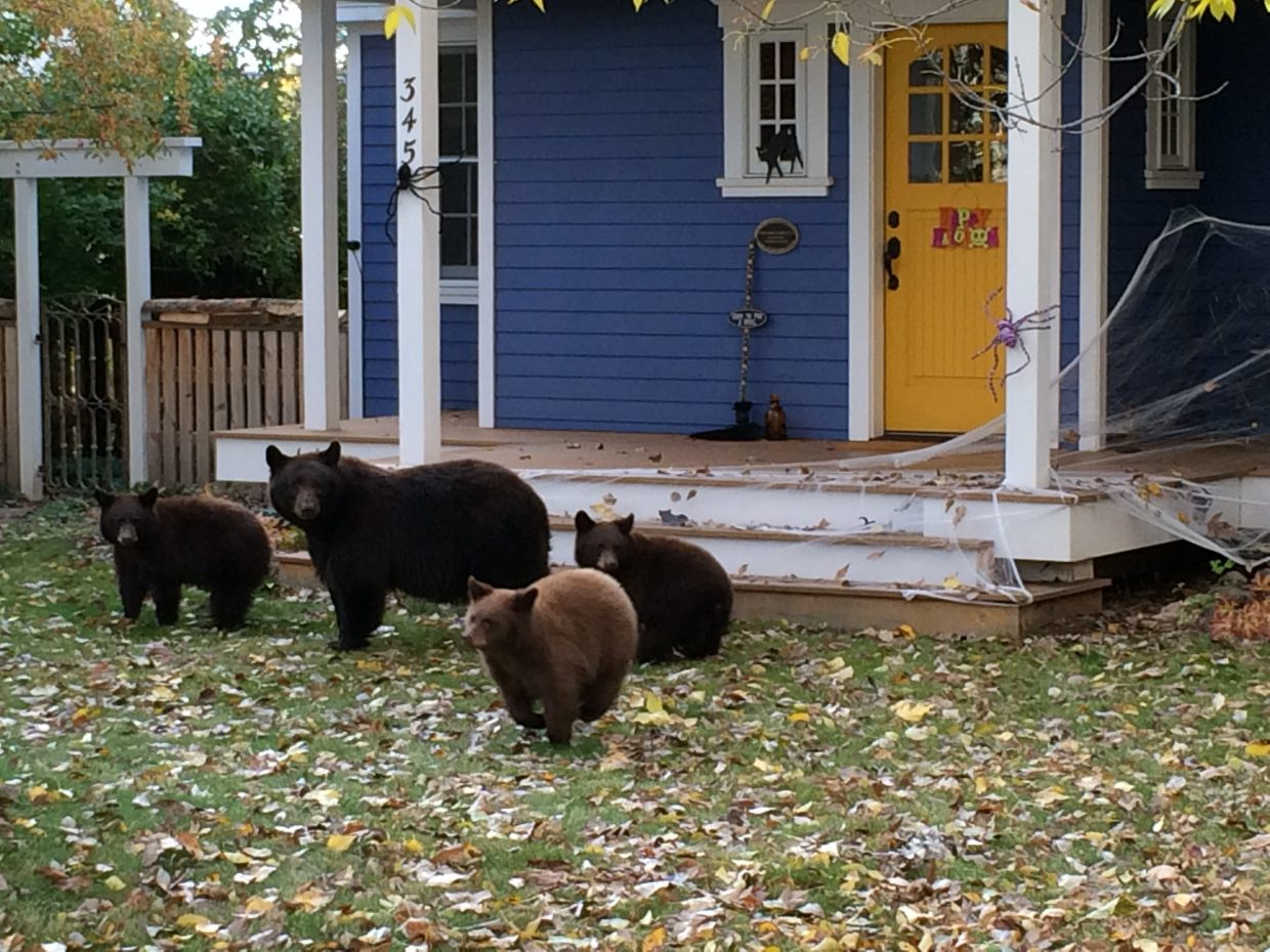 Bear family trick or treating on Sixth Street in Old Town Steamboat Springs. Submitted by Kelly Becker.