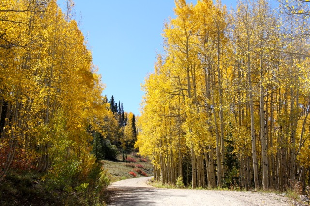 Thursday on Buffalo Pass. Submitted by: Shannah Kennedy