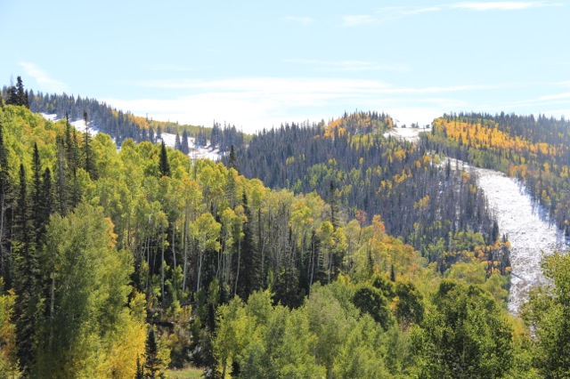 Taken today on a walk from top of gondola to Rendevouz. Submitted by: Shannah Kennedy