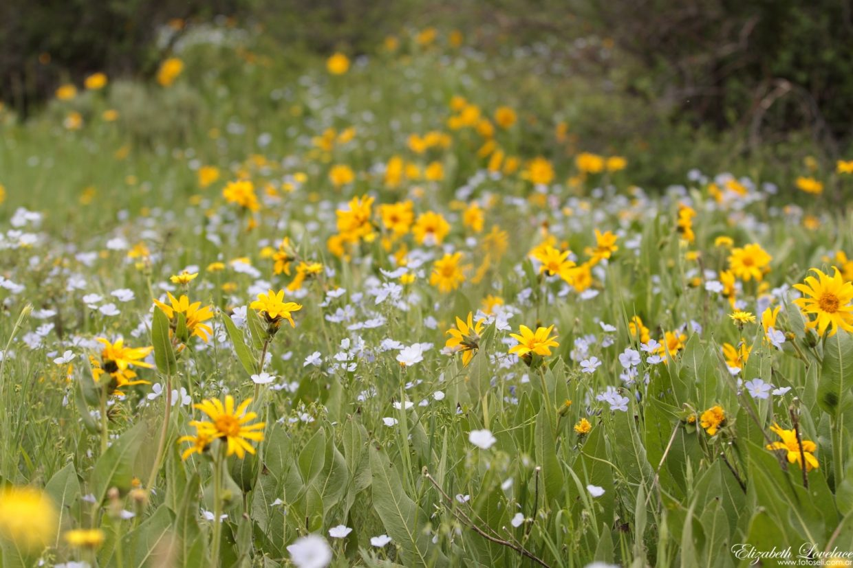 Wildflowers on Tuesday. Submitted by: Elizabeth Lovelace