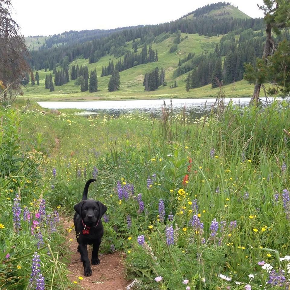 Yampa River Dory's first Dumont Lake hike yields a bumper crop of wildflowers! Submitted by Phyllis Cron.