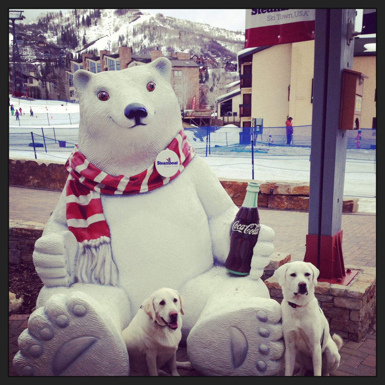 Polar Bear Club with Clyde and Daisy. Submitted by: Jessica Scroble