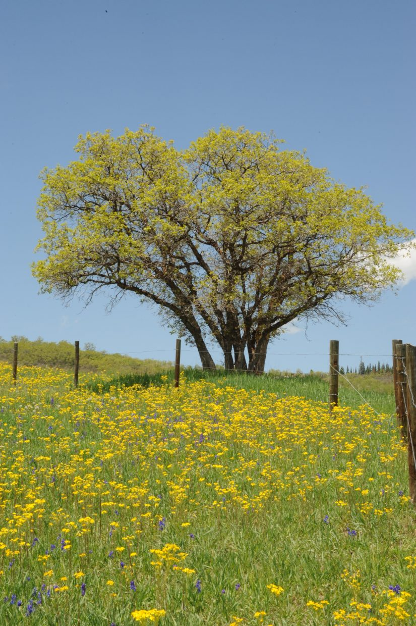 Spring in Steamboat. Submitted by: Lee McShane Cox