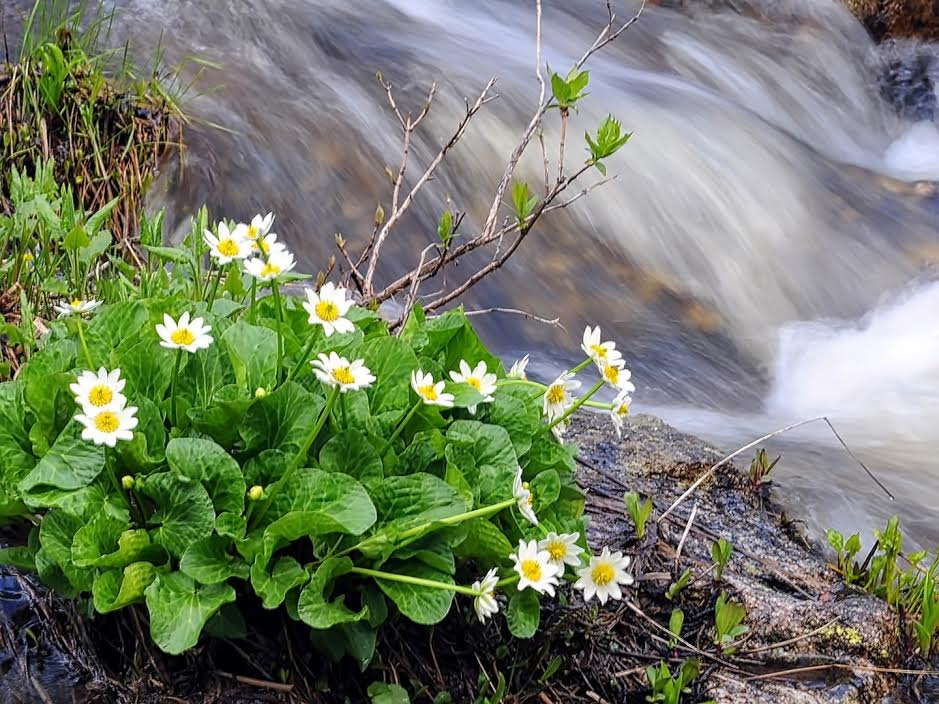 High country wild flowers at Fish Creek Falls. Submitted by Jeff Hall.