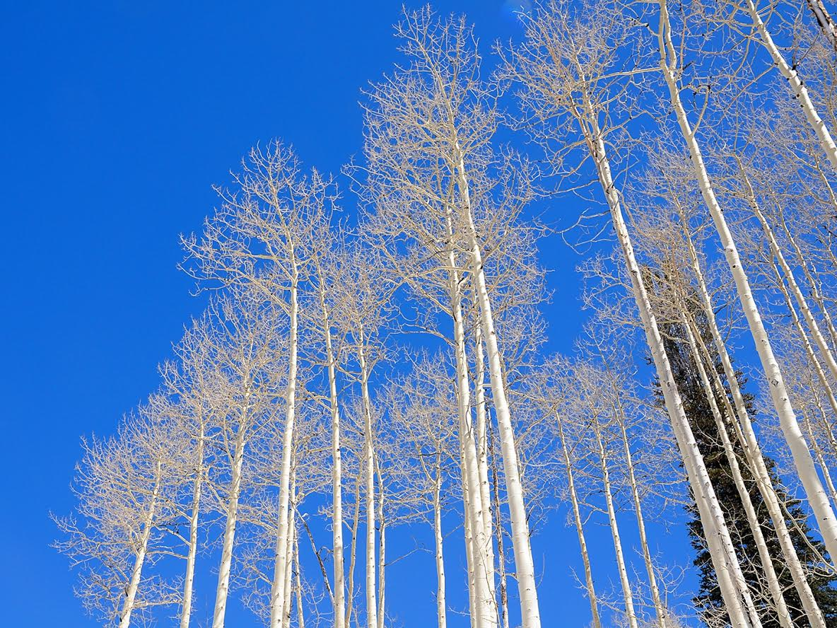 """Aspens."" Submitted by Jeff Hall."