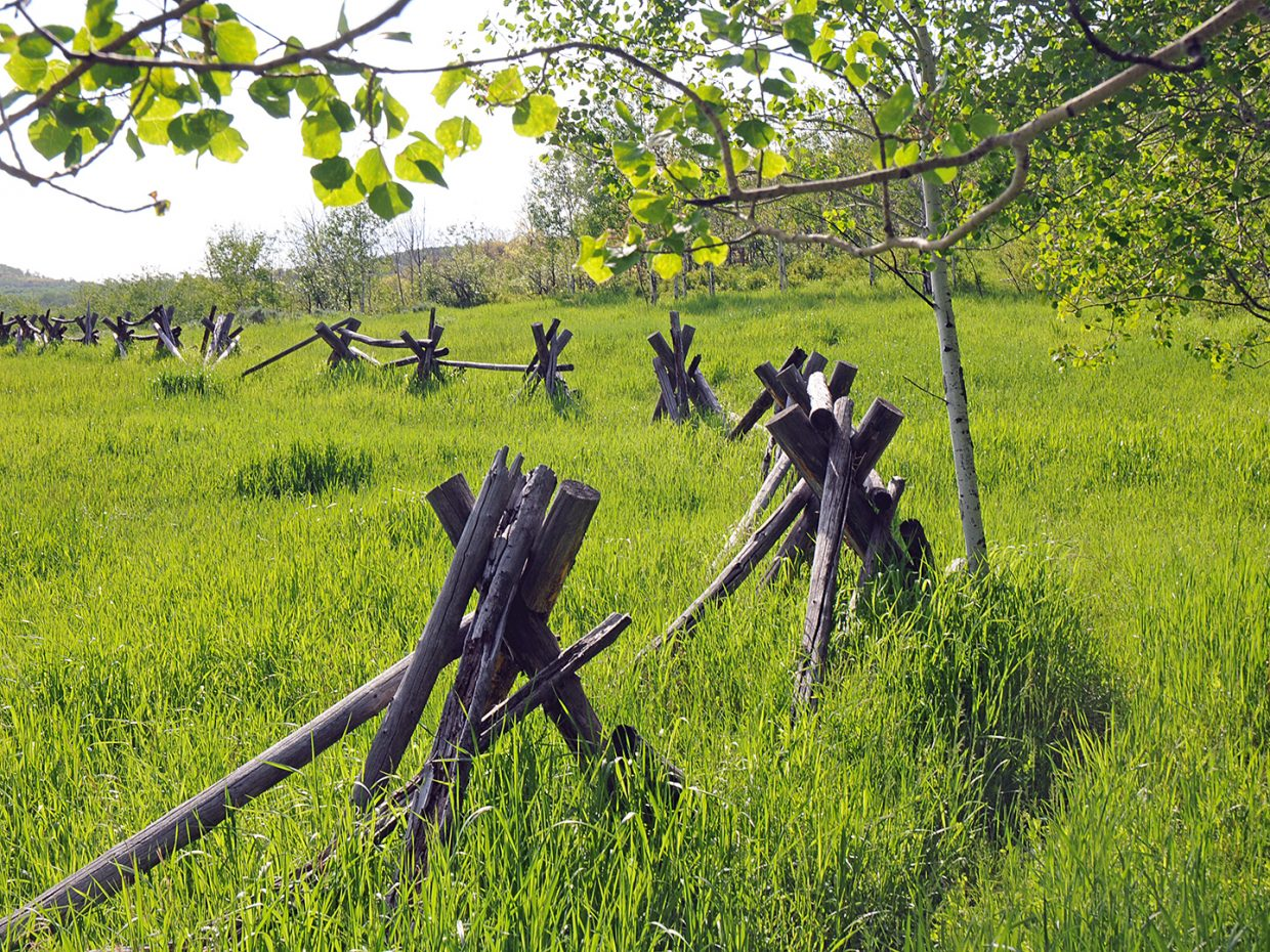 A split rail along the Mad Creek trail. Submitted by Jeff Hall.