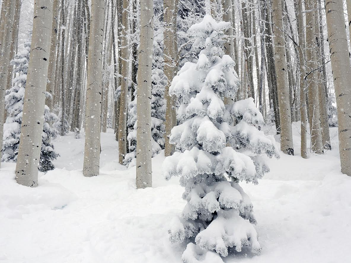 Snow in the trees at Steamboat Ski Area. Submitted by Jeff Hall.