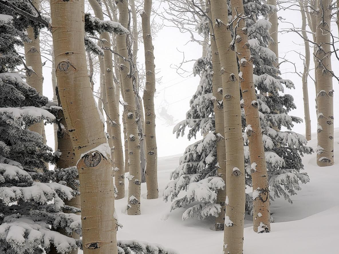 """""""It's April in Steamboat."""" Submitted by Jeff Hall."""