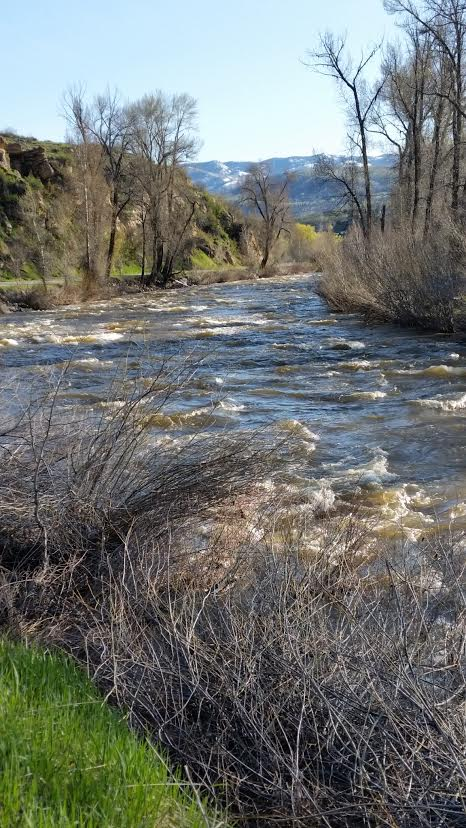 """Yampa River early spring."" Submitted by Joanne Hedges."