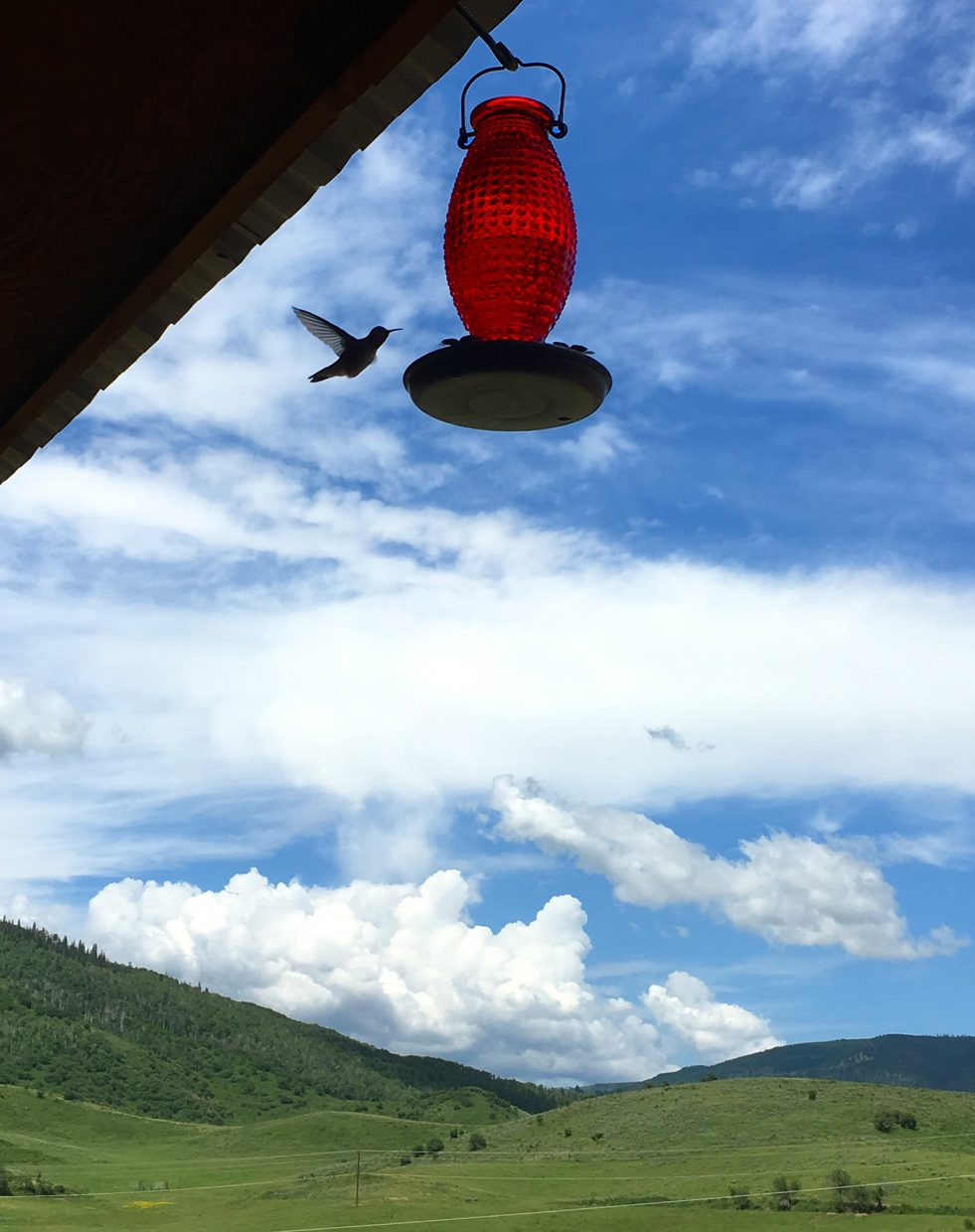 A broad-tailed hummingbird visits a porch feeder in Oak Creek on Sunday. Submitted by John Dickson.