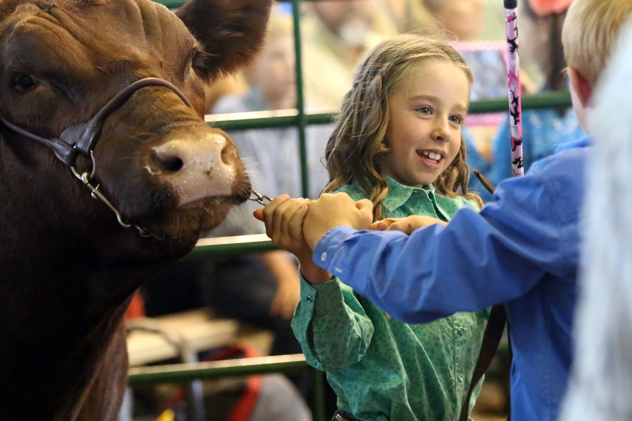 Josie Meyring pulls her cow into the pen during the Routt County Junior Livestock Sale in 2015. The 103rd annual Routt County Fair gets underway Aug. 12 in Hayden.