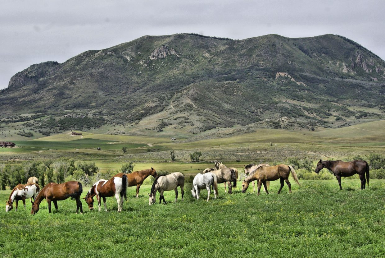 Just grazing under Elk Mountain. Submitted by: Sharon Bedell