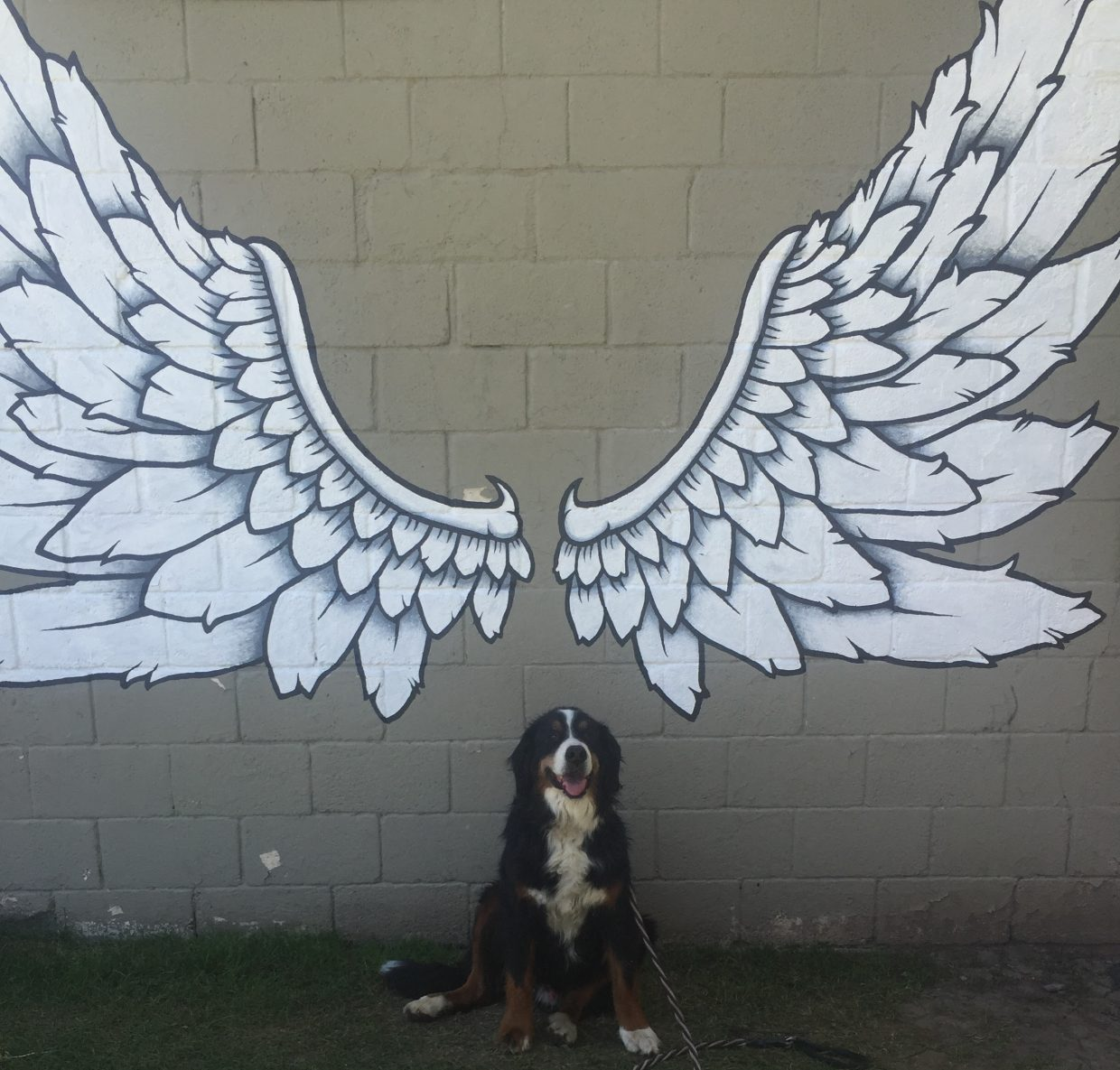Barley with wings at Kali's Boutique. Submitted by Kelsey Riordan.