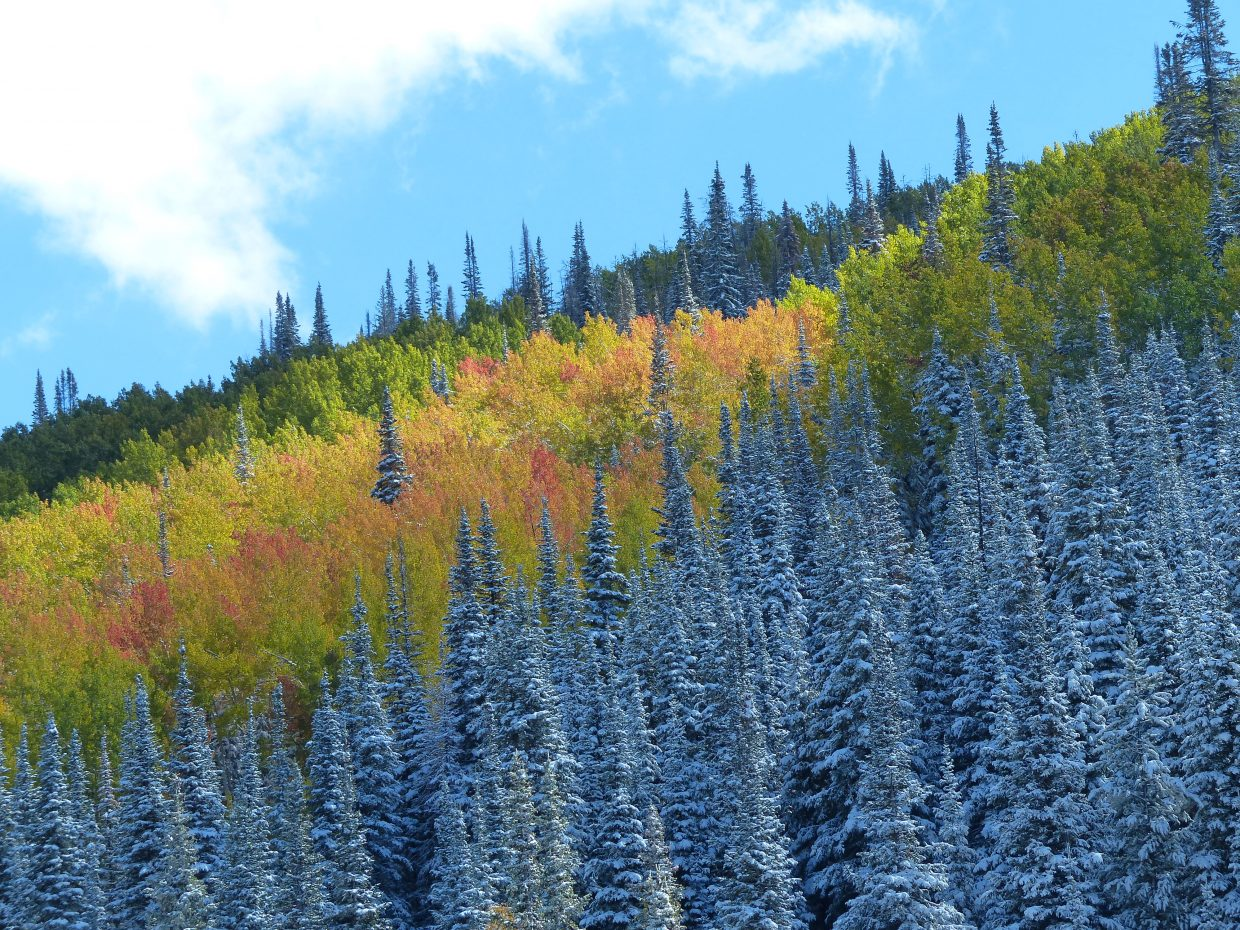 A beautiful day in Steamboat Springs. Submitted by: Blake Mendoza
