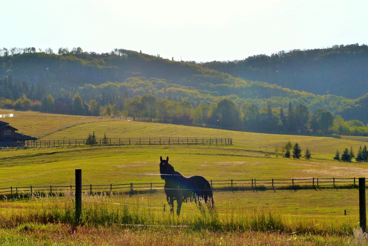 This is Tex, a nice horse who lives in South Routt County. Tex was enjoying a beautiful sunset. Submitted by: Shannon Lukens